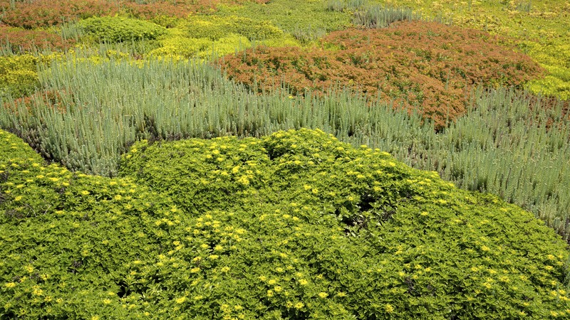 World Wildlife Fund Green Roof